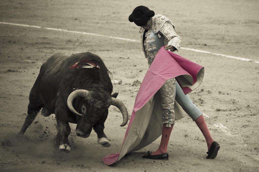 Коррида в Мадриде фото Javier Corbo