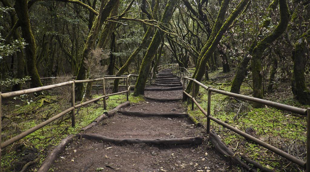 Национальный Парк Гарахонай- одно из самых потрясающих мест на Канарских островах и занимает 10% поверхности острова Гомера/ Фото: Diego_Delso (Flickr / C.C.)