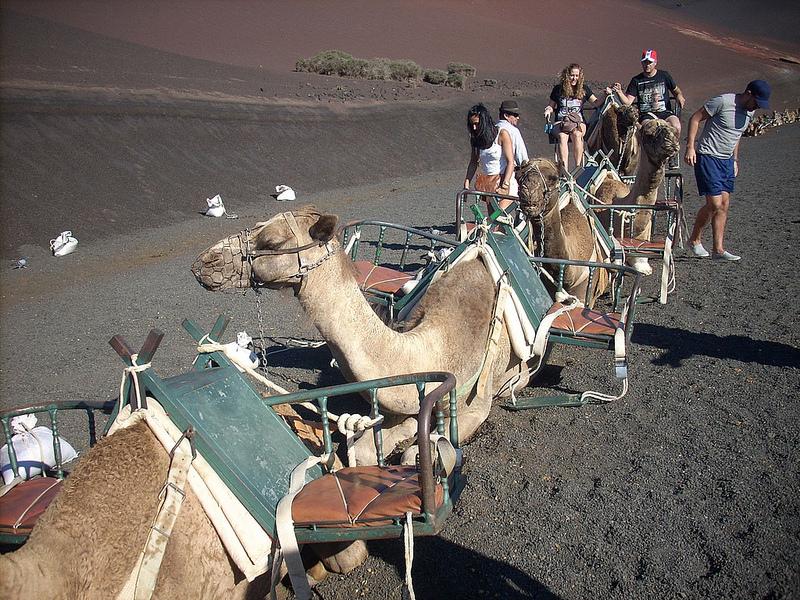 Верблюды используются для совершения туристических прогулок по дюнам/ Фото: Gonmi (Flickr / C.C.)